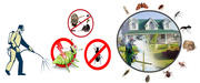 Delivering extra ordinary pest control & building services In QLD