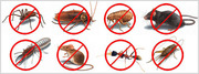 Delivering extra ordinary pest control Services throughout Brisbane