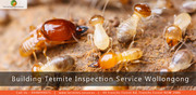 Building Termite Inspection Service Wollongong