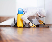 Pest Control South Yarra | Quality Pest Inspection Services